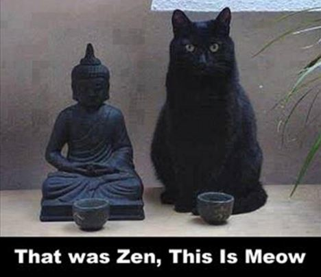 That was Zen this is Meow